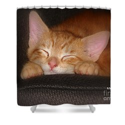 Dreaming Kitten Shower Curtain by Patrick Witz