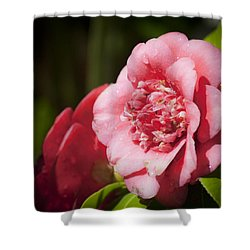 Dreamy Camellia Shower Curtain by Teresa Mucha