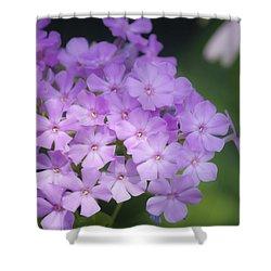 Dreamy Lavender Phlox Shower Curtain by Teresa Mucha