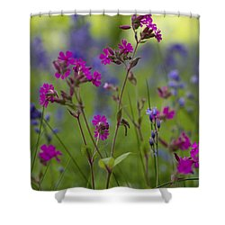 Shower Curtain featuring the photograph Dreamy Wildflowers by Clare Bambers