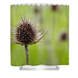 Dried Thistle Shower Curtain by Carlos Caetano