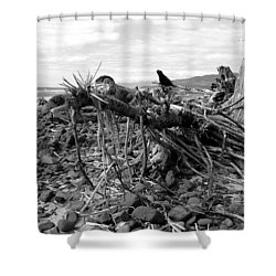Shower Curtain featuring the photograph Driftwood And Rocks by Chriss Pagani