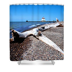 Shower Curtain featuring the photograph Driftwood At Erie by Michelle Joseph-Long