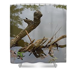 Shower Curtain featuring the photograph Driftwood by Renee Trenholm