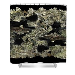 Driftwood Study Shower Curtain by Tim Allen