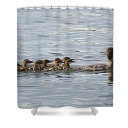 Duck And Ducklings Swimming In A Row Shower Curtain by Keith Levit