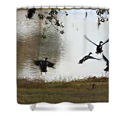 Duck Frenzy Shower Curtain by Douglas Barnard