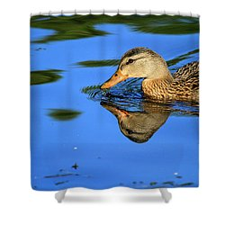 Duck Reflects Shower Curtain by Karol Livote