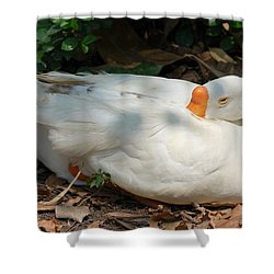 Shower Curtain featuring the photograph Duck Resting by Fotosas Photography