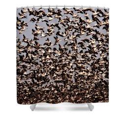 Duck Wall Shower Curtain