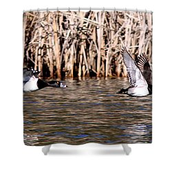 Ducks - Ring Neck - Hold Up Shower Curtain by Travis Truelove