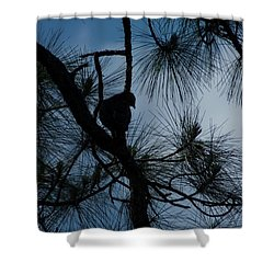 Shower Curtain featuring the photograph Dusk by Joseph Yarbrough