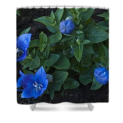 Dwarf Balloon Flower Platycodon Astra Blue 2 Shower Curtain by Steve Purnell