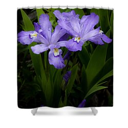 Dwarf Crested Iris Shower Curtain by Rob Travis