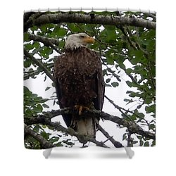 Shower Curtain featuring the photograph Eagle At Hog Bay Maine by Francine Frank