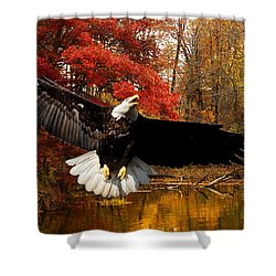 Shower Curtain featuring the photograph Eagle In Autumn Splendor by Randall Branham