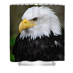 Eagle In Ketchikan Alaska 1371 Shower Curtain