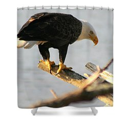 Shower Curtain featuring the photograph Eagle On His Perch by Kym Backland