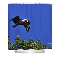 Shower Curtain featuring the photograph Eagle Over The Tree Top by Randall Branham