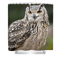 Eagle Owl II Shower Curtain