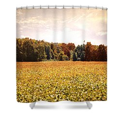Early Autumn Harvest Landscape Shower Curtain by Jai Johnson
