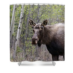 Shower Curtain featuring the photograph Early Spring by Doug Lloyd