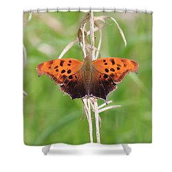 Shower Curtain featuring the photograph Eastern Comma Butterfly by Penny Meyers