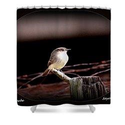 Eastern Phoebe - Sayornis Phoebe Shower Curtain by Travis Truelove