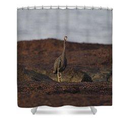 Eastern Reef Egret-dark Morph Shower Curtain by Douglas Barnard