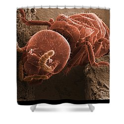 Eastern Subterranean Termite, Sem Shower Curtain by Ted Kinsman