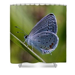 Eastern Tailed-blue Butterfly Din045 Shower Curtain