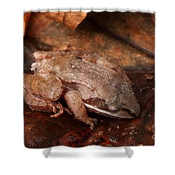 Eastern Wood Frog Hibernating Shower Curtain by Ted Kinsman