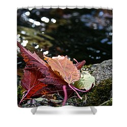 Edge Shower Curtain by Susan Herber