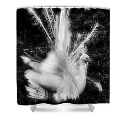 Effervescence II  Shower Curtain