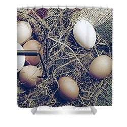 Eggs Shower Curtain by Joana Kruse