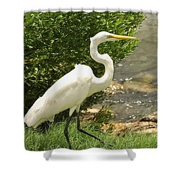 Shower Curtain featuring the photograph Egret By The Bay by Rick Frost