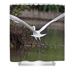 Egret In Flight Shower Curtain