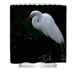 Shower Curtain featuring the photograph Egret On A Branch by Art Whitton