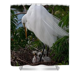 Shower Curtain featuring the photograph Egret With Chicks by Art Whitton