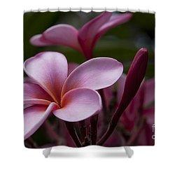 Eia Ku'u Lei Aloha Kula - Pua Melia - Pink Tropical Plumeria Maui Hawaii Shower Curtain by Sharon Mau