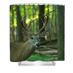 Eight Point_9531_4366 Shower Curtain by Michael Peychich