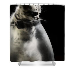 Shower Curtain featuring the photograph El Kitty by Jessica Shelton