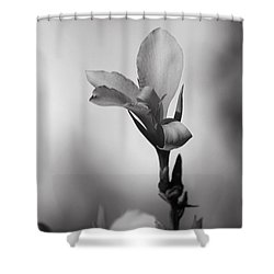 Elegantly Shower Curtain by Laurie Search