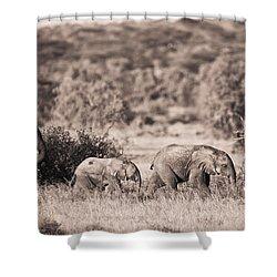 Elephants Walking In A Row Samburu Kenya Shower Curtain by David DuChemin