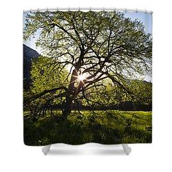 Elm In Cook's Meadow Shower Curtain by Rick Berk