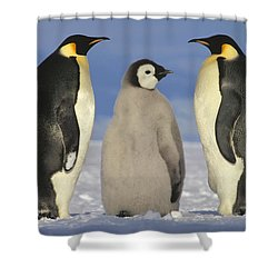 Emperor Penguin Aptenodytes Forsteri Shower Curtain by Tui De Roy