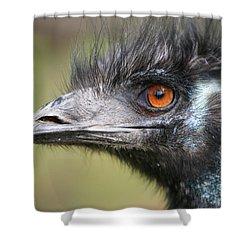 Emu Shower Curtain by Karol Livote