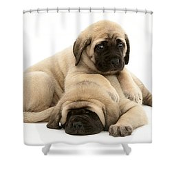 English Mastiff Puppies Shower Curtain by Jane Burton