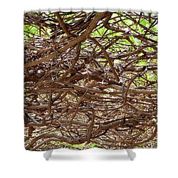 Entangled Shower Curtain by Maria Urso
