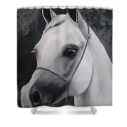 Equestrian Silver Shower Curtain by Kayleigh Semeniuk